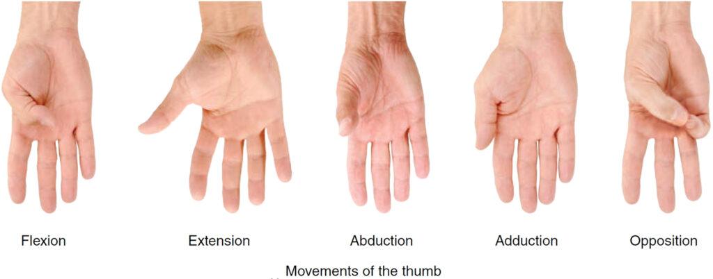 thumb movements